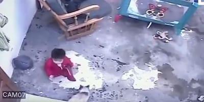 salotto in cui si vede il bimbo vicino alle scale e il gatto che l'ha salvato