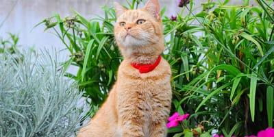 Come funziona il collare Seresto® per gatti?