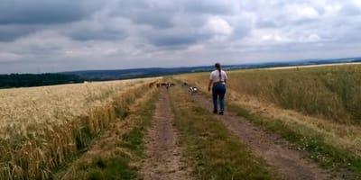 Ein ungewöhnlicher Hunde-Spaziergang