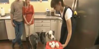 Sie hält dem Hund den Kuchenteller hin
