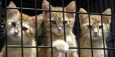 Adoptar gato refugio