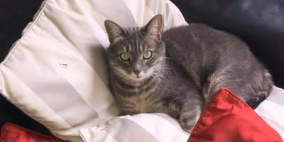 Kätzchen Nala ist verschwunden