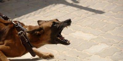 Huge shake up of UK dog ownership laws sees irresponsible owners slammed