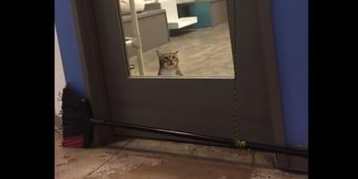 gatto chiuso all'interno di una stanza