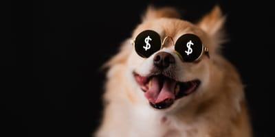Hund mit Dollarzeichen in den Augen
