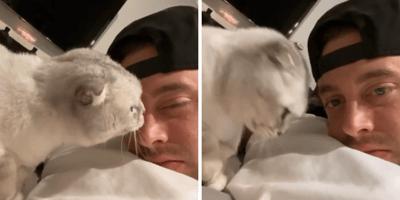 gato no quiere besos