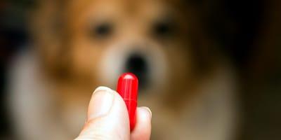 Hund und rote Tablette