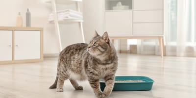 Cleaning my cat's litter box: what is the ideal cleaning frequency?