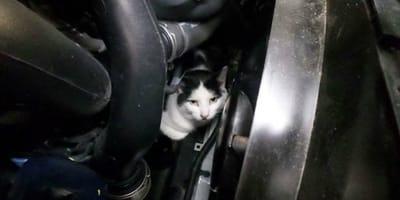 gato en el motor de un coche