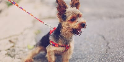 Does your dog have a personality? Is he as individual as you?