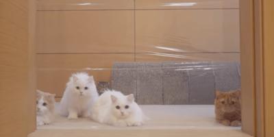 gatos puerta invisible
