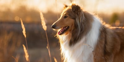 Elegant, kraftvoll oder niedlich: Diese Hunde sind wahre Schönheiten