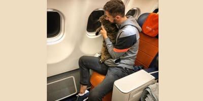 Kot_w_samolocie