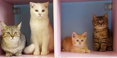 Kitties everywhere