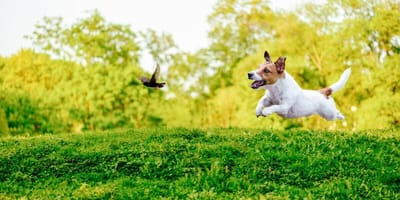 Hund jagt Vogel