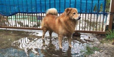 Die Zoonose Leptospirose: Gefahr für Hund und Mensch