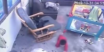 Baby krabbelt durchs Zimmer, Katze auf dem Sofa