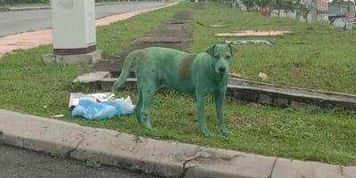 Zielony_pies_Malezja