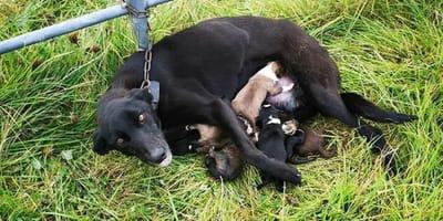 Ausgesetzter Hund an Leitplanke festgebunden
