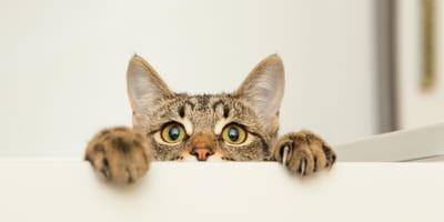 Jak widzi kot,  czyli świat widziany oczami kota
