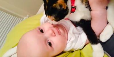 Gatito conoce a un bebé y el resultado es DEMASIADO tierno… ¡Este video te derretirá el corazón!