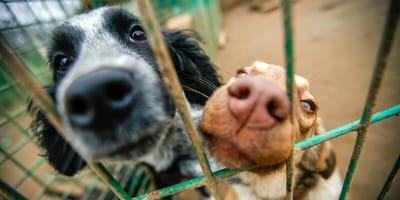 Procedury, spotkania, wizyty - czy organizacje prozwierzęce utrudniają adopcję zwierząt?