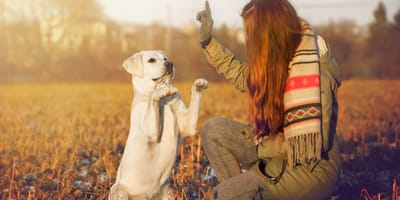 Guía para entrenar a tu cachorro como un auténtico educador canino
