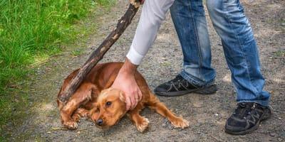 web yodenuncio como denunciar maltrato animal pacma