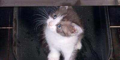 Domian ist entsetzt über die Katze im Ofen