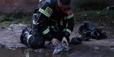 Feuerwehrmann belebt Katze wieder