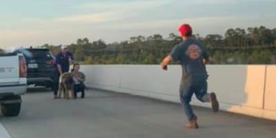 Mann rennt auf Hündin zu