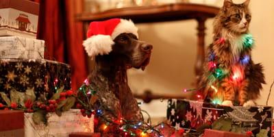 cane-e-gatto-su-regali-di-natale