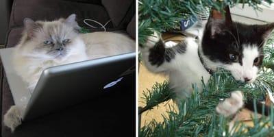 cosas terribles para gatos