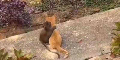 Affe und Kätzchen umarmen sich