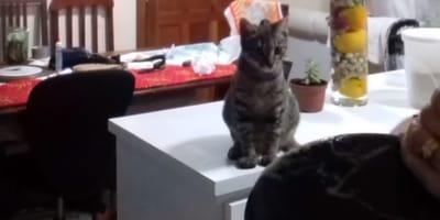 Kätzchen hinter Frau beim Abwasch