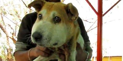 La cabeza de este perro callejero es tres veces más grande de lo normal: cuando el veterinario lo examinaba, gritó