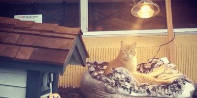 un gato en su casita