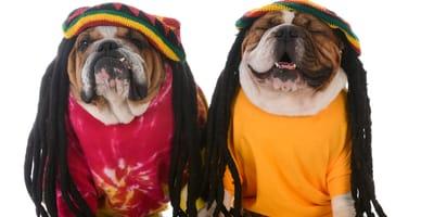 ¿Cómo le ayuda la música de Bob Marley a mi perro?