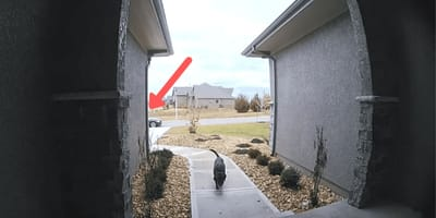 Mężczyzna obserwuje labradora przez wizjer, kiedy następuje niespodziewany atak (VIDEO)