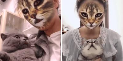 gatos mirando filtro de gatos