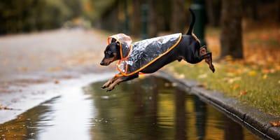 Regenmantel für Hunde: So bleibt das Fell trocken