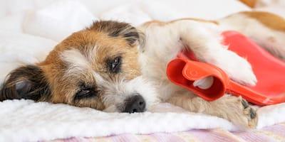 Gastroenteritis en perros: síntomas, causas y tratamiento