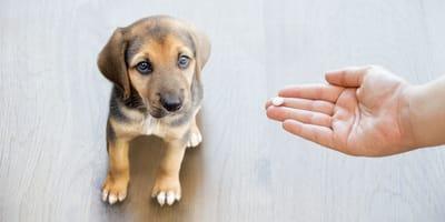 Synulox für Hunde: Wichtige Informationen zum Medikament