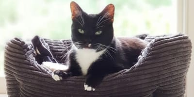 Lonely cat wants a home for Christmas