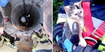 Akcja ratunkowa małego kotka