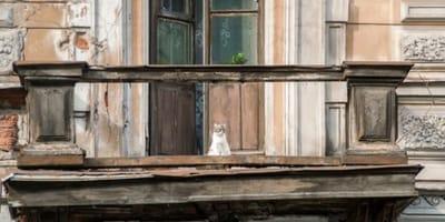 gatto-bianco-e-rosso-su-balcone