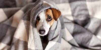 Los perros pueden tener frío en invierno
