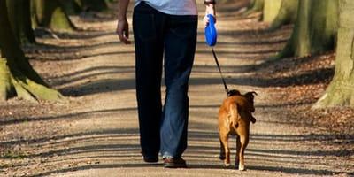 Mann geht mit Hund Gassi