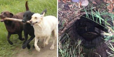 3 Hunde rennen mit Stock im Maul