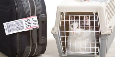 gato en un transoortin y maleta